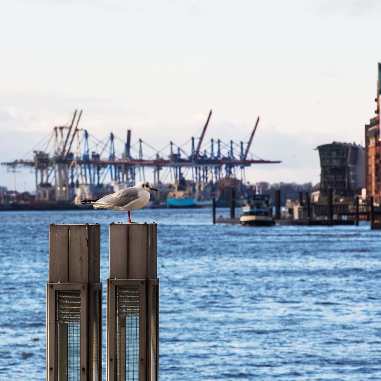 Hamburg_DitunDat-Vorschau-ohne-1100